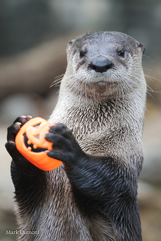 It's the Daily Otter's Halloween 2017 Mega-Post! 6