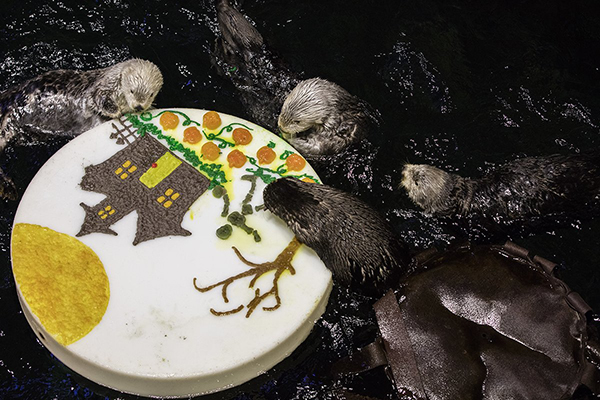 Shedd Aquarium's Sea Otters Had a Spooky Good Time on Halloween 3