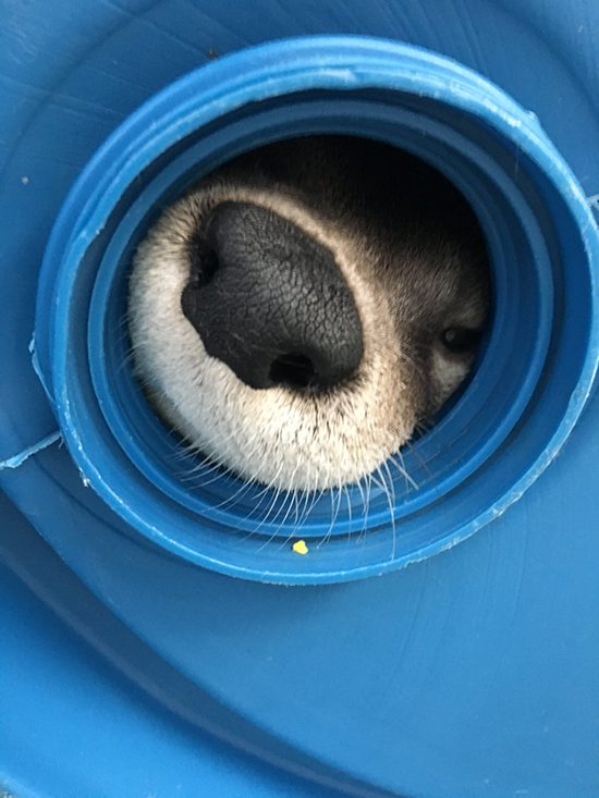 Otter's Snoot Is Isolated for Booping