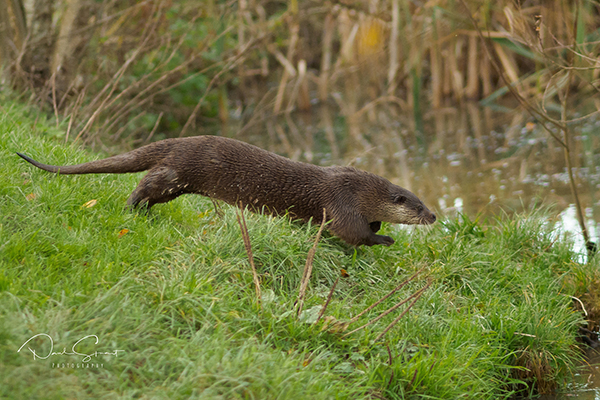 Otter's Seriously on the Move