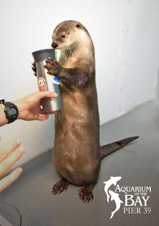 What Is This Weird Dark Liquid You Drink, Human? It Smells Funny.
