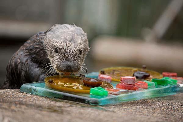 The Aquarium Is a Veritable Smorgasbord, Orgasbord, Orgasbord