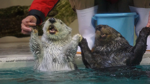 These Otters Wish All of You a Happy New Year!