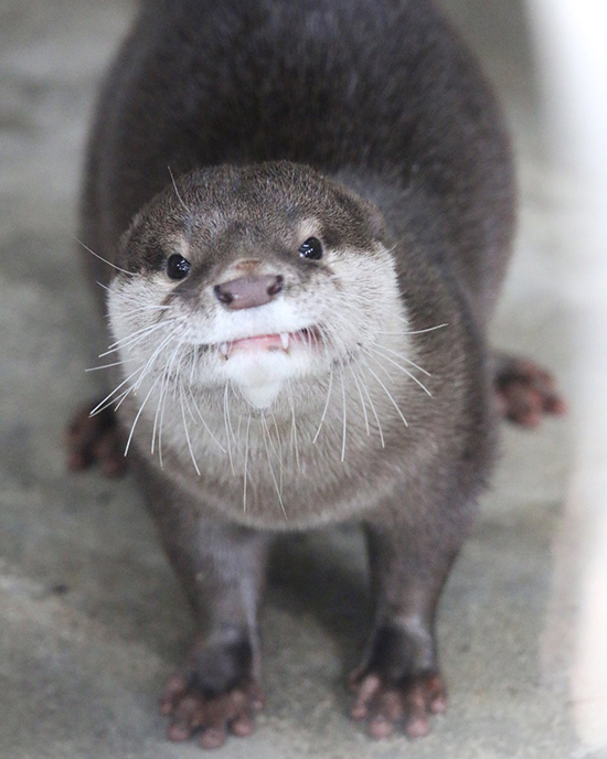 What Little Fanglings You Have, Otter