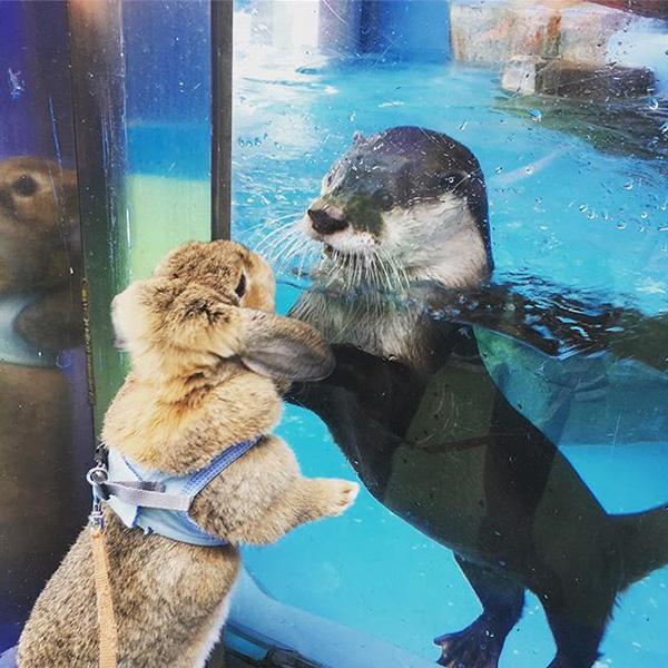 Otter, Meet Bunny
