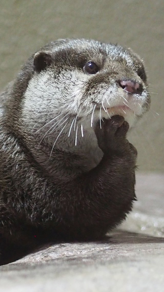 Otter Is Lost in Thought About... Existentialism? Theoretical Physics? Lunch?