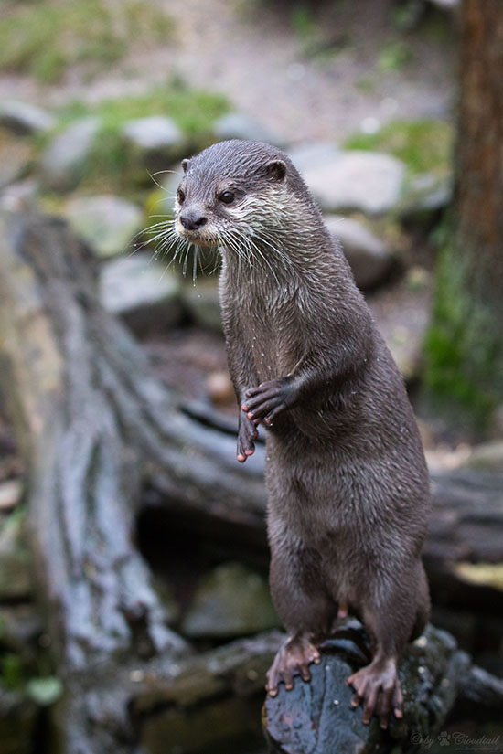 What Excellent Balance You Have, Otter!