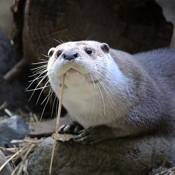 Look, I'm Half Walrus!