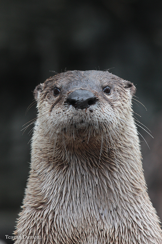 Otter Gets His Mugshot Taken