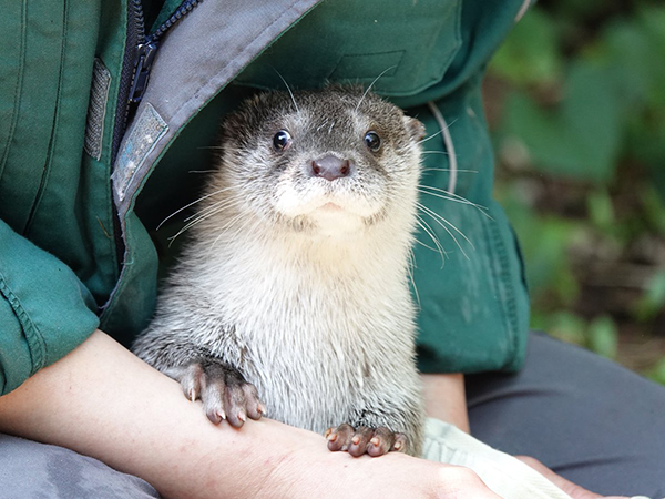 Otter Poses for a Proper Portrait with the Keeper