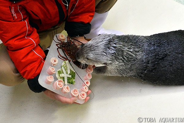 Sea Otter Is Presented with a Beautiful and Tasty Treat