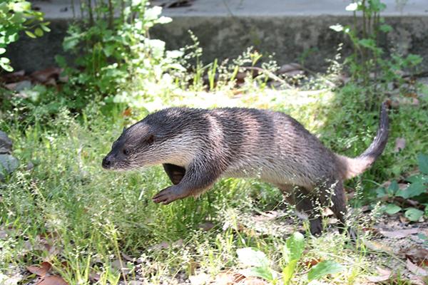 Otter Leap!