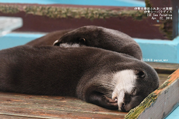 Otter Dreams of Nibbling on a Snack