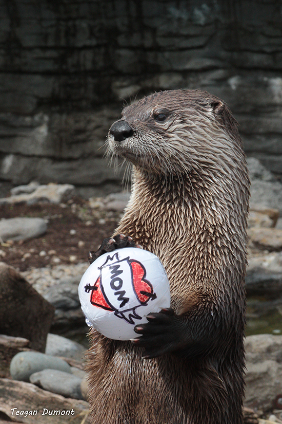 Otter Is Ready for a Mother's Day Game of Catch