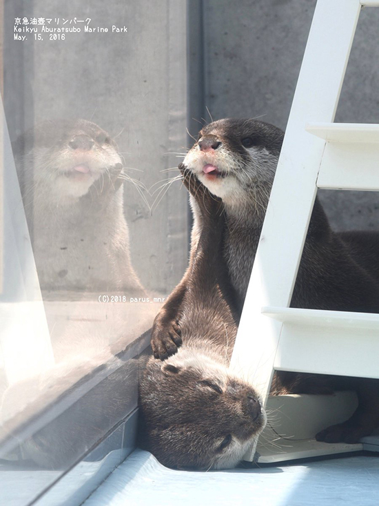 Otter Does NOT Want a Smooch, ThankYouVeryMuch 2