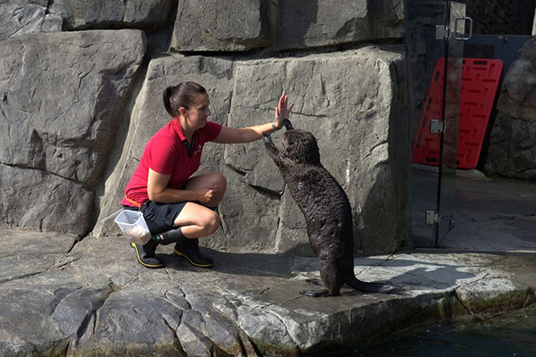 Sea Otter Adjusts Human's High Five Stance
