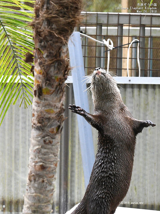 Today Is World Otter Day, and It's GLORIOUS!