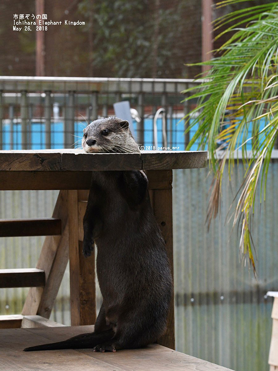 A Behind-the-Scenes Look at Otter's Magic Trick