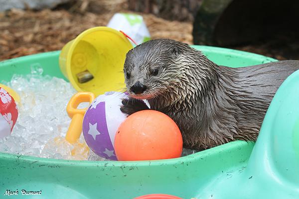 Otter's Got a Great Summery Setup Here