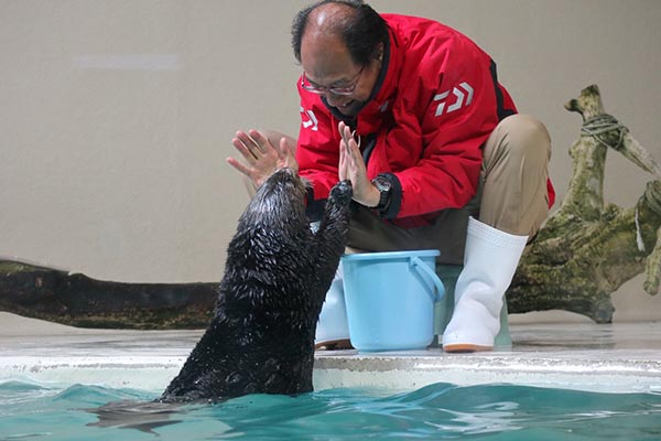 Sea Otter Gives Human a Double High-Five