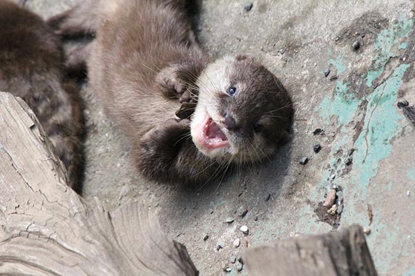 Otter Pup Is Such a Delight