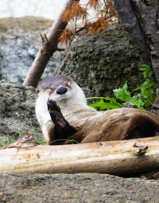 Otter Half-Heartedly Sits Up to Wave at the Camera