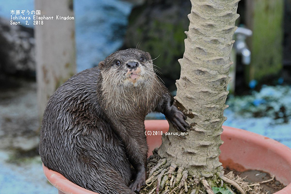 Otter Shows Off Her Tree