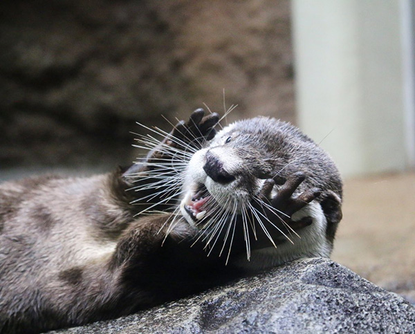 Otter Is Shocked and Delighted