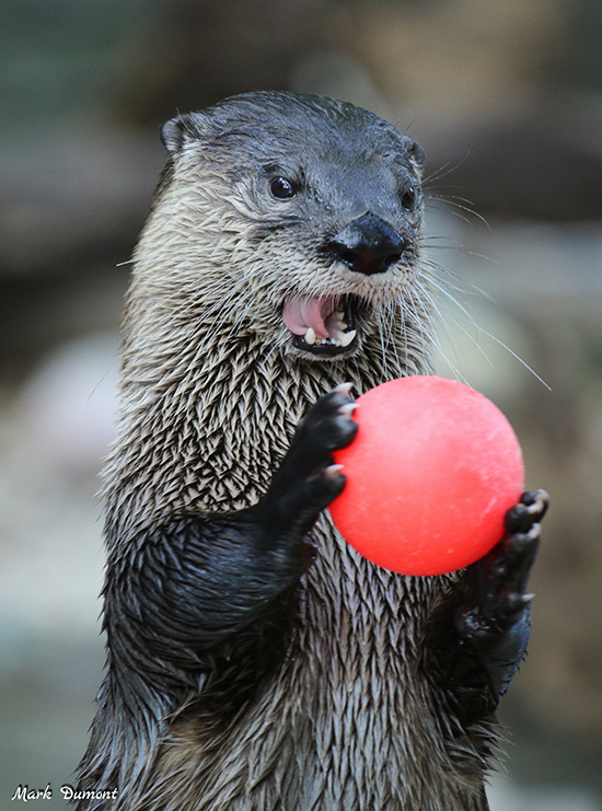Anyone Up for a Game of Catch with Otter?