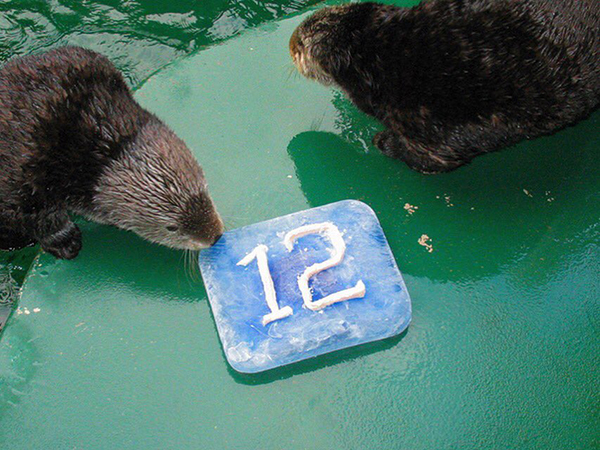 Seattle Sea Otters Supported Their Football Team Last Night