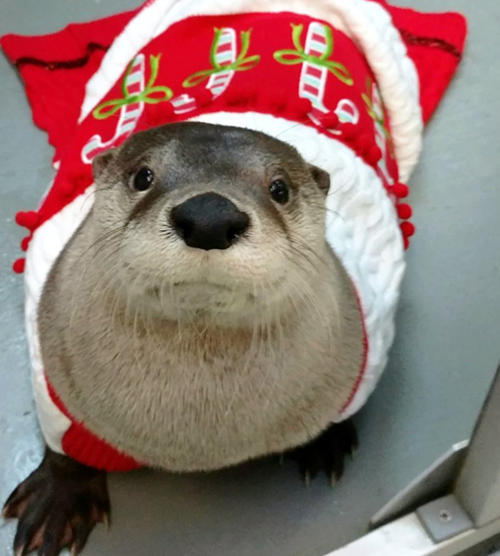 Have Otterly Happy Holidays! 2