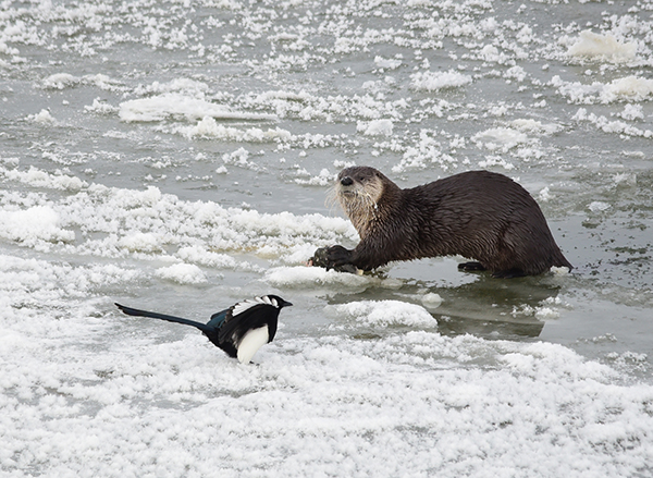 Get Out of Here, Bird, This Is MY Fish!