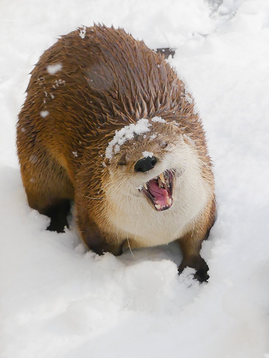 I'm Singing in the Snow, Just Singing in the Snow