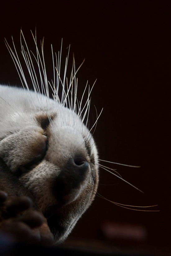 Otter's Whiskers in Contrast