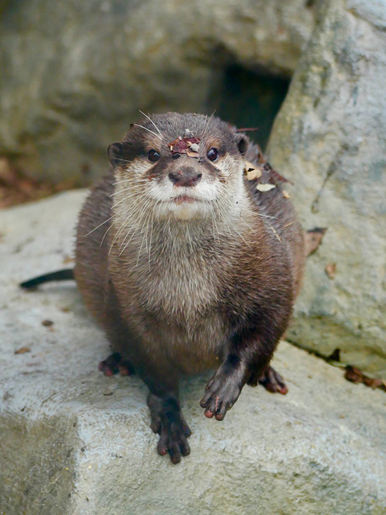 Hey, Otter, You Have a... Oh, Never Mind