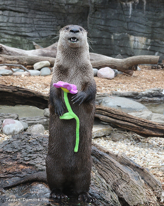 Otter Is So Glad to Finally Greet Spring!