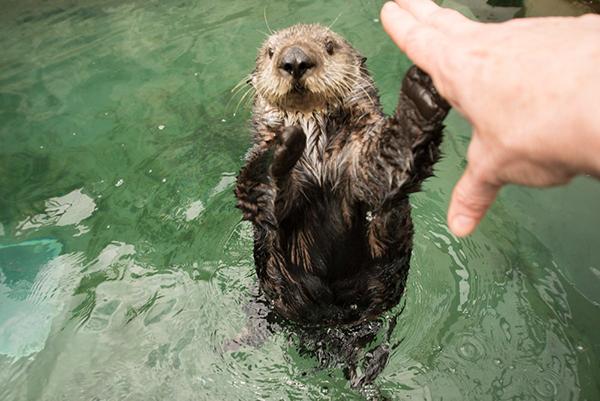 Gimme Five, Human!