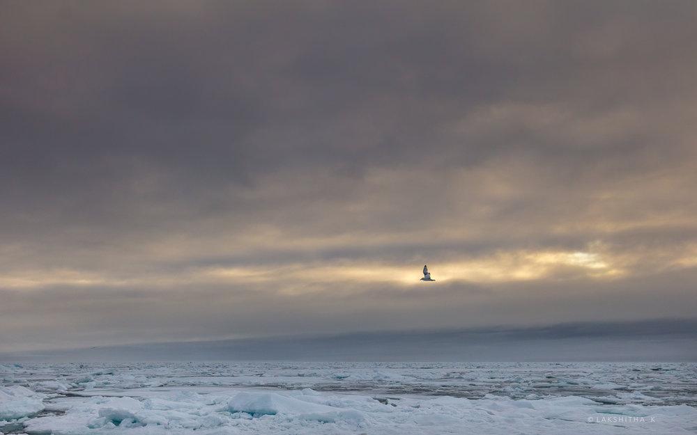 ice & bird1.jpg