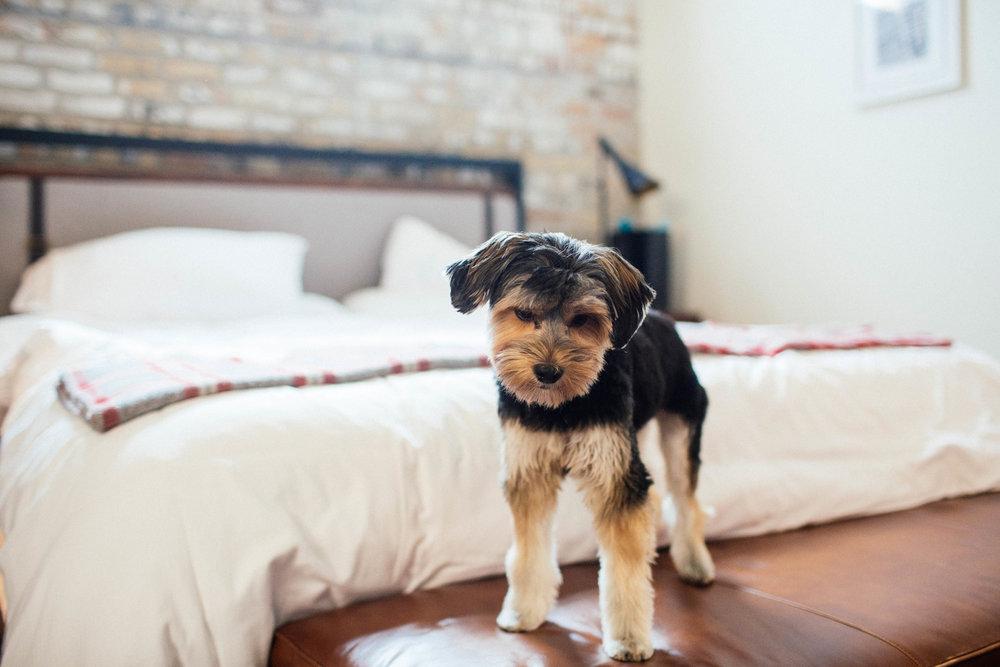 Minneapolis Dog Wedding Photographer