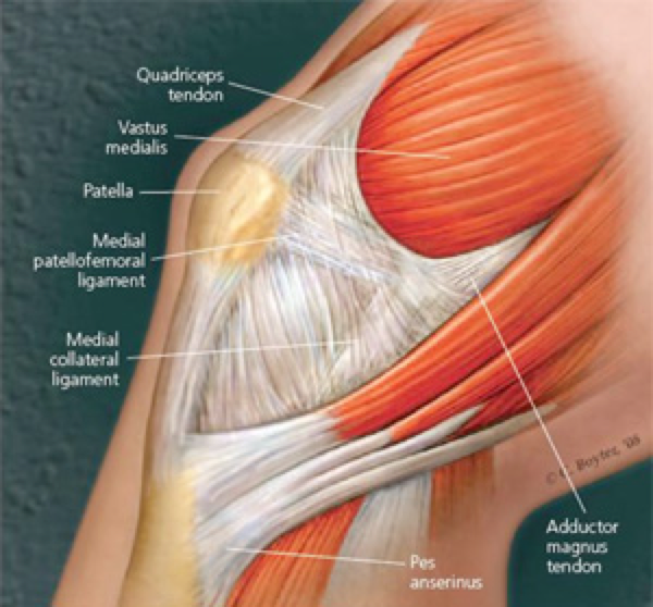 The kneecap lies within the quads tendon