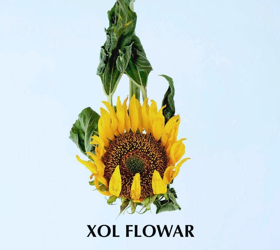 XOL FLOWAR Lulu Matute