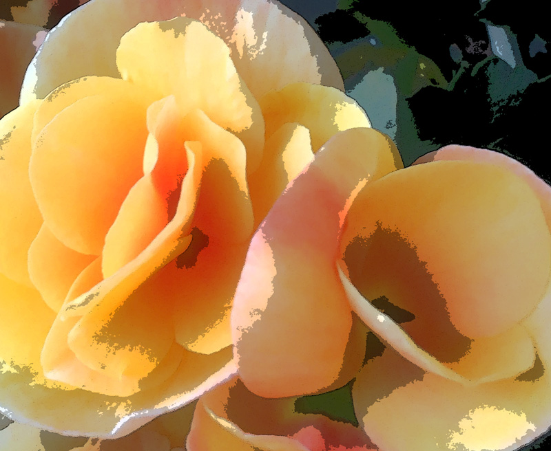 rose-begonia-poster-edges.jpg