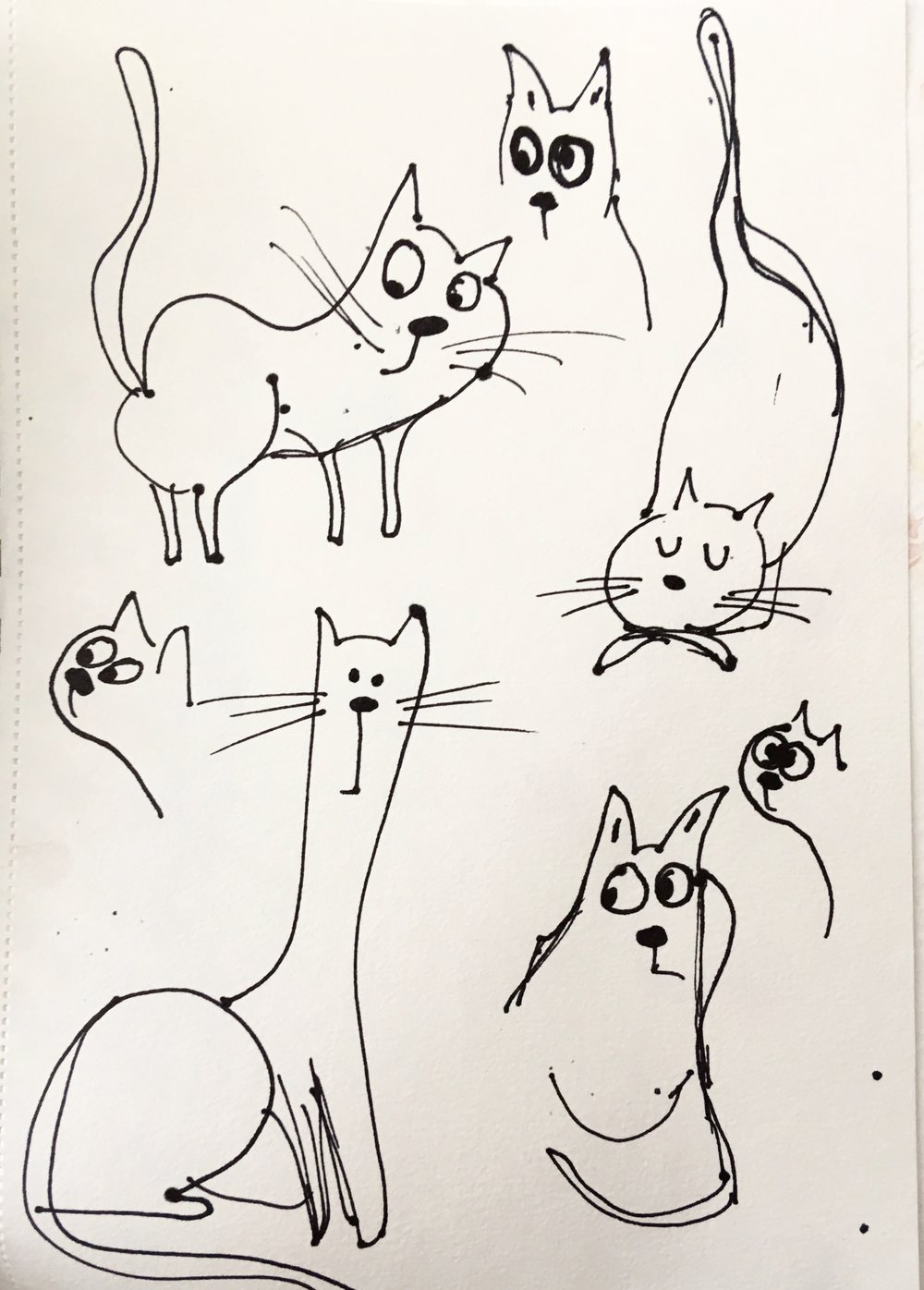 Some of Carol's cats...