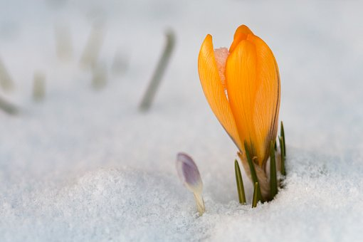 flower in snow2.jpg