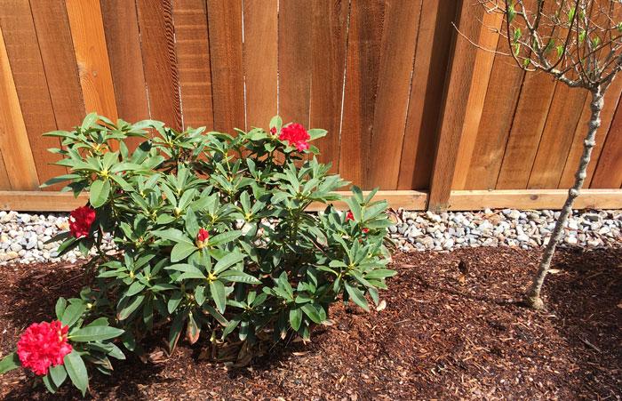 plants-blooming.jpg
