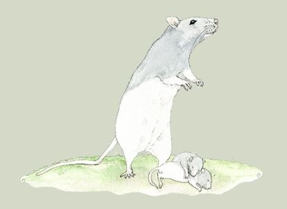 Rat-watercolor.JPG
