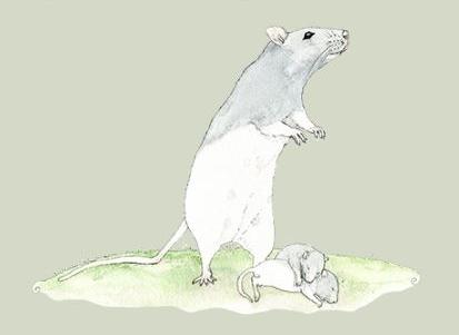 Rat-watercolor.JPG