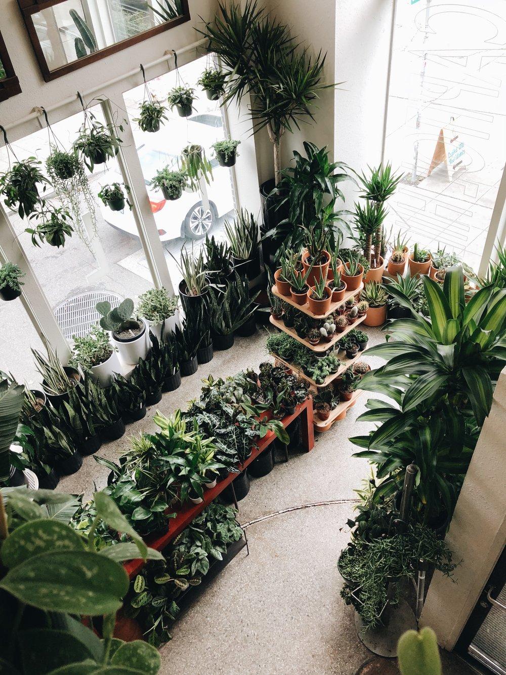 Plant Shop, Seattle