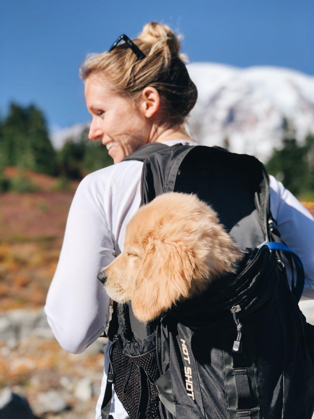 Mount Rainer- Paradise Hike