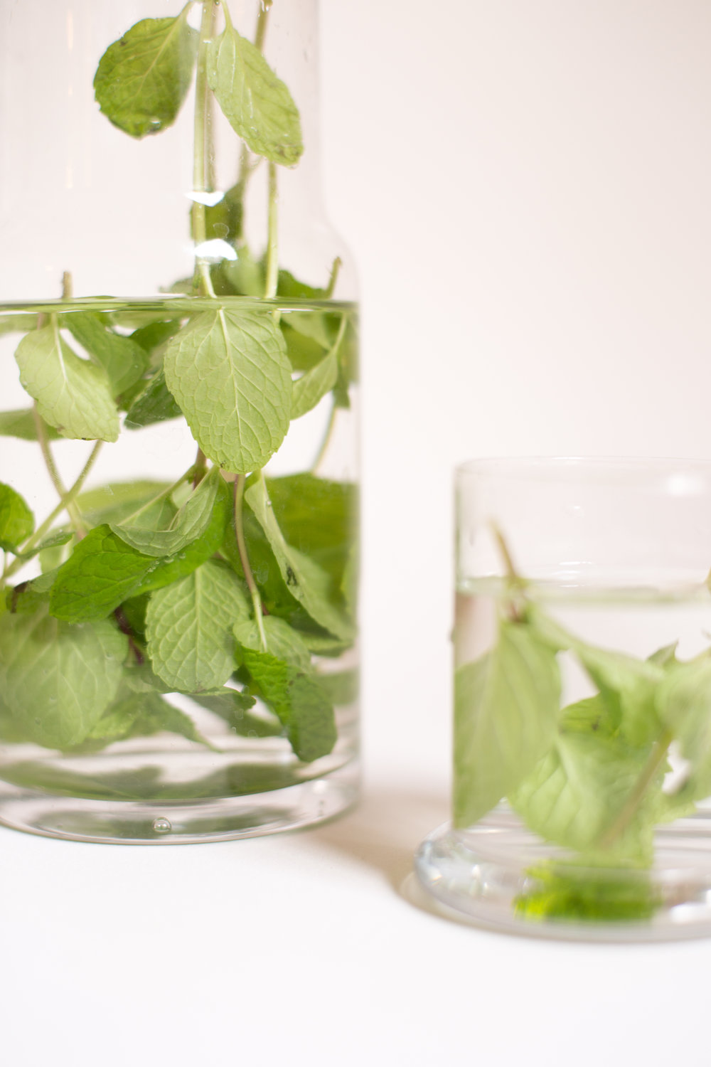 mint-plants-and-herbs.jpg